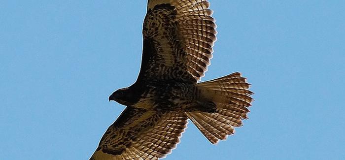 Senior Hawk Spotlight: Nalani DeJesus