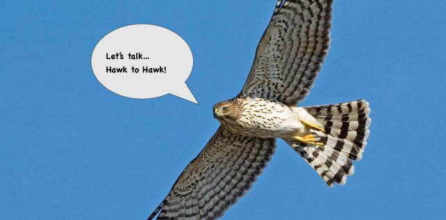 Introducing Hawk To Hawk!