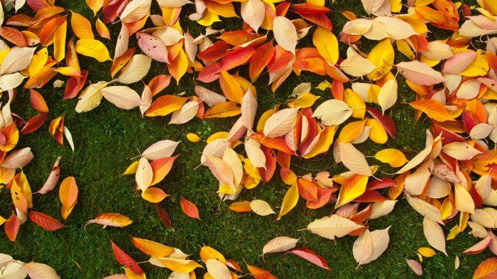 Poetry: Autumn Love